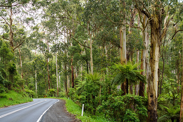 Enchanted Elopements and Weddings - Wedding Locations in the Dandenong Ranges